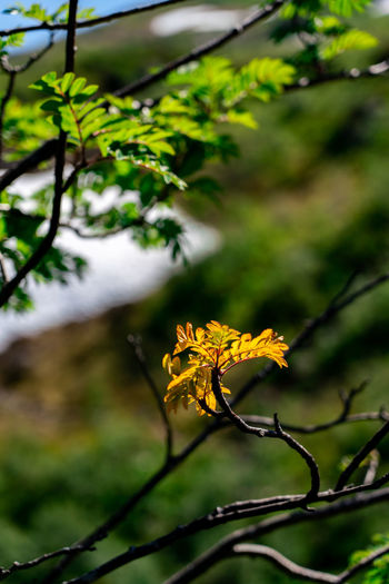 No rain for a long time forced this leaf to think it is fall early in the along fossestien (Waterfall path) in Gaula. Beauty In Nature Close-up Day Focus On Foreground Fragility Leaf No People Outdoors Plant