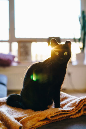 Pets Mammal One Animal Indoors  No People Cat Cats Cats Of EyeEm Kitten Kitty Black Cat Black Home Home Interior Playing Young Sunset Golden Hour Profile Whisker Looking Sitting Feline Animal Looking At Camera