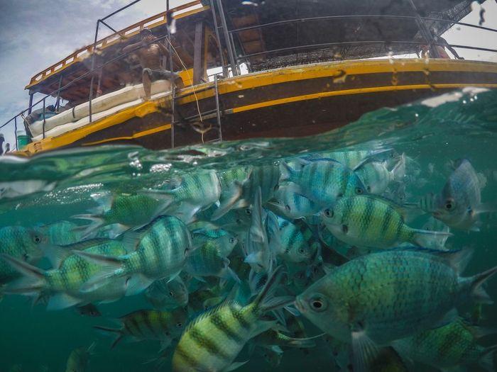 Underwater world First Eyeem Photo