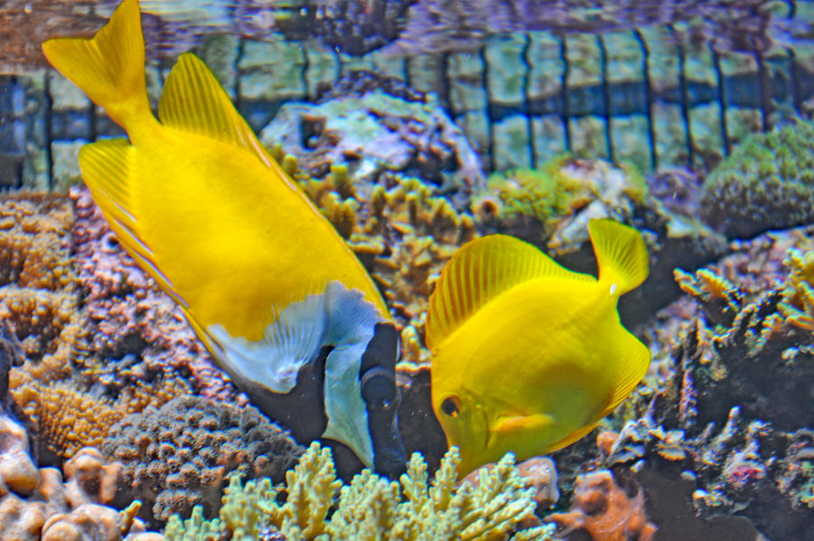 Abundance Animal Themes Animals In The Wild Arrangement Backgrounds Change Close-up Coral Coral Fish Detail Fish Full Frame Nature Nature Photography One Animal Sea Life Springtime Swimming UnderSea Underwater Variation Water Wildlife