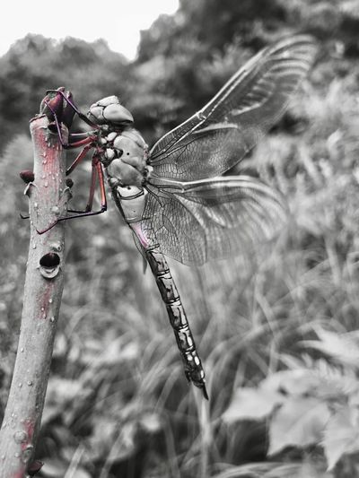 https://youtu.be/tZdOy-Dd_nc Blackandwhite Photography High Contrast Nature Focus On Foreground Day Close-up Animal Animal Themes Animals In The Wild One Animal Animal Wildlife Selective Focus Animal Wing Outdoors Insect