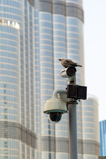 Bird perching on surveillance camera on street against building