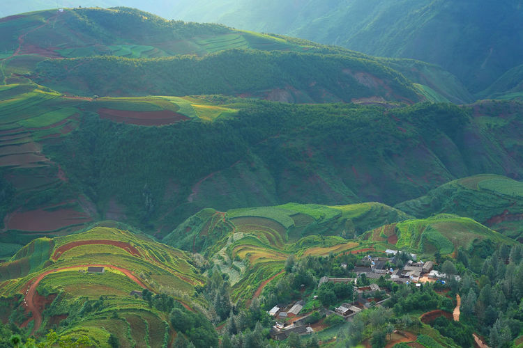 Beautiful landscape of village on mountain range with beam light in morning at Hongtudi in Dongchuan, Yunnan, Kunming of China Scenics - Nature Landscape Environment Beauty In Nature Rural Scene Land Mountain Green Color Tranquil Scene Tranquility Plant Field Agriculture Growth Day No People Terraced Field Terrace Nature Tree Outdoors Plantation China Village