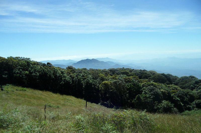 กิ่วแม่ปาน(ยอดดอยอินทนนท์) Tree Beauty In Nature Nature Rural Scene Scenics No People Landscape Agriculture Outdoors Sky Mountain Tea Crop Day Forest Grass Freshness