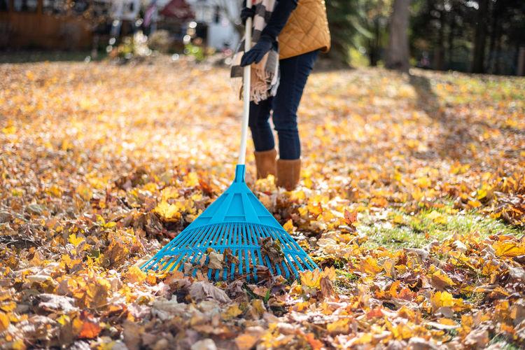 Low section of woman raking at yard