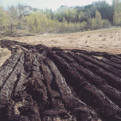 Perfekt 1 mai aktivitet. Pløying Norgetrengerbonden 1mai Boraas gårdsdrift bonden småbrukerlaget detgodebondeliv farmer