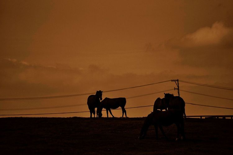 Silhouette Horses Against The Sky