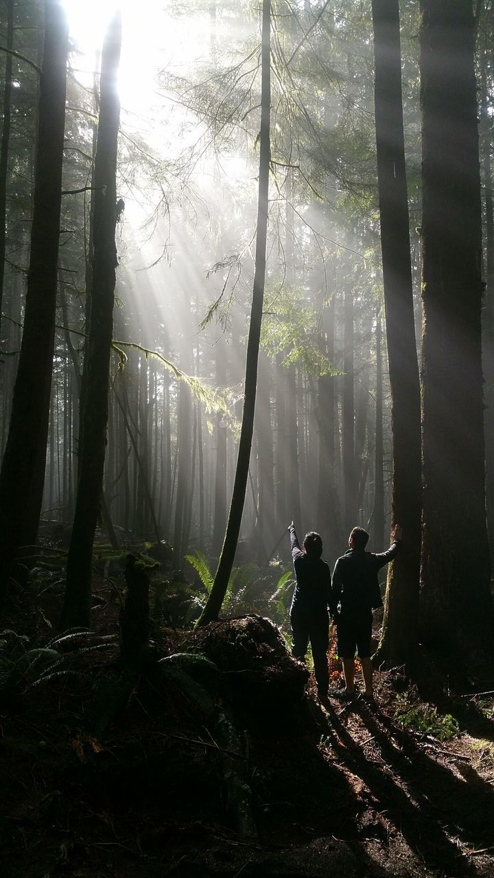 Rear View Of Hikers In Forest