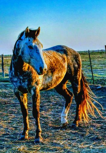 Ranch horses Standing Horse Animal Themes Domestic Animals Full Length Outdoors Ranch Lifestyle Barn Rural Farm Cowboy Western Country Livestock Pony Pasture Equine Stable Stallion Calvary Working Animal Rural Scene No People Hoof