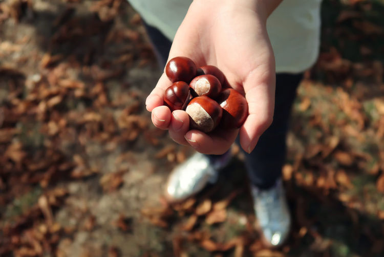 Low Section Of Person Holding Chestnuts