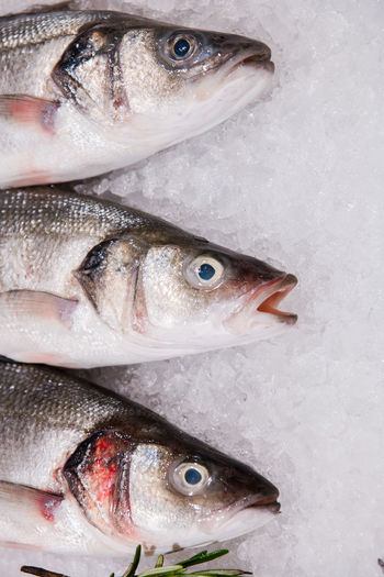 fresh fish on ice Fish Vertebrate Seafood Food And Drink Animal Food Freshness Wellbeing Raw Food Healthy Eating No People Close-up Cold Temperature Indoors  For Sale High Angle View Retail  Directly Above Large Group Of Objects Ice The Foodie - 2019 EyeEm Awards The Foodie - 2019 EyeEm Awards