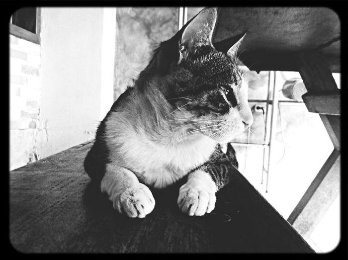 Pets Cat Fado ❤️? First Eyeem Photo