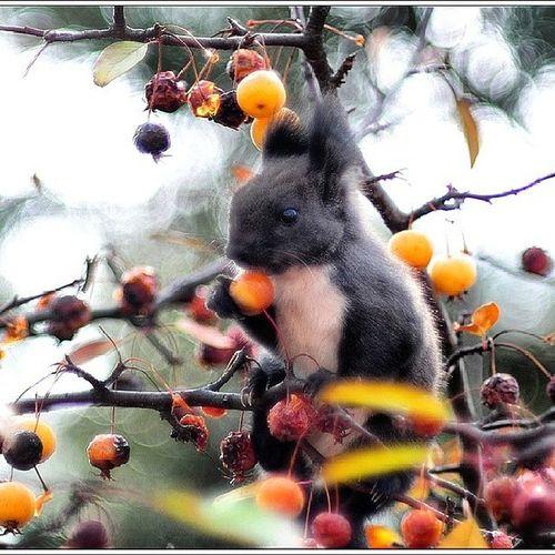 청설모 Korean_squirrel