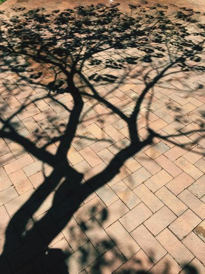 Shadow Sunlight Focus On Shadow Day High Angle View Full Frame Arid Climate No People Outdoors Nature The Street Photographer - 2017 EyeEm Awards Falllowme Chicago The Great Outdoors - 2017 EyeEm Awards Like4like Fallow4fallow
