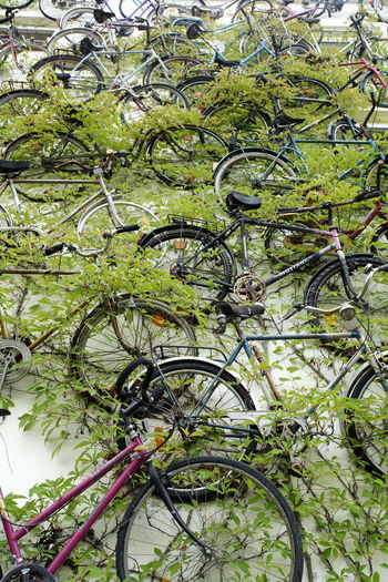 Bicycle Branch Close-up Day Green Color Growth Large Group Of Objects Leaf Many Nature No People Outdoors Tree
