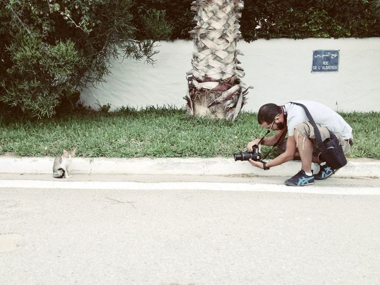 Cat Streetphotography Eye4photography  Designer
