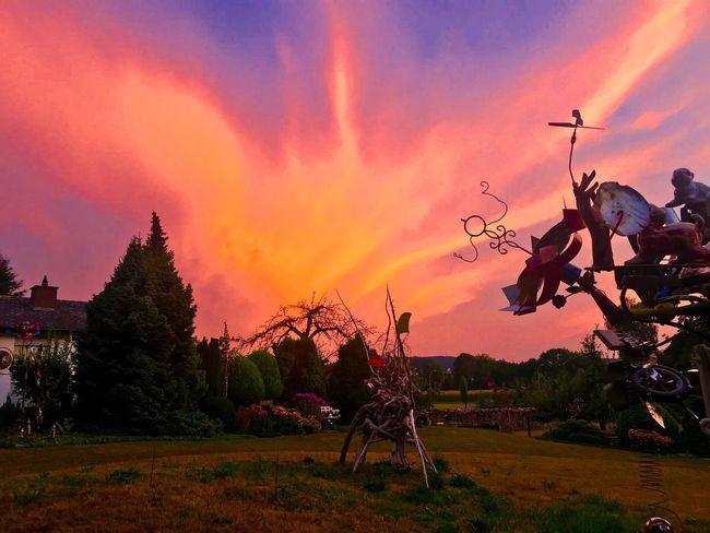 Sky Sunset Cloud - Sky Plant Orange Color Tree Nature
