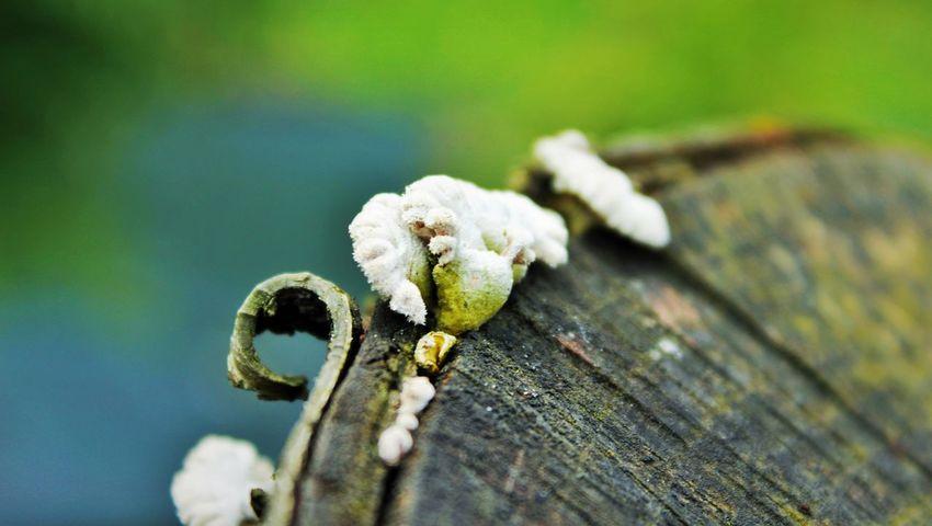 Nature Canonphotography Feeling Inspired Amaznig Spiring Spiringcollection Poland 💗 🌞🌞🌞🌞☀☀☀😊😄😄😄😄 Tree Art