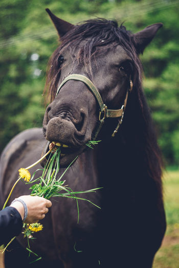Close-up of hand holding horse outdoors