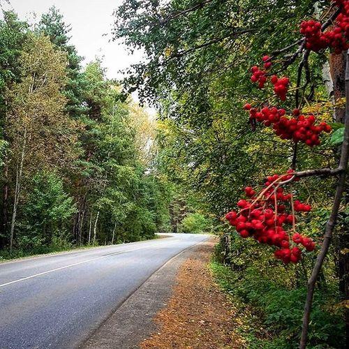 осень Дорога Road киндери nature instaday 2015 september time trees рябина hashtags cool instalike көз autumn green red миләш rowan