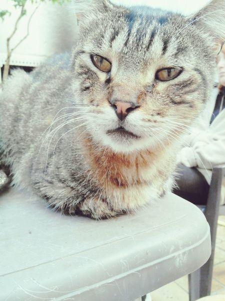 • Nesquik.?Cats Photography Love Animal • Follow me, follow back. ?