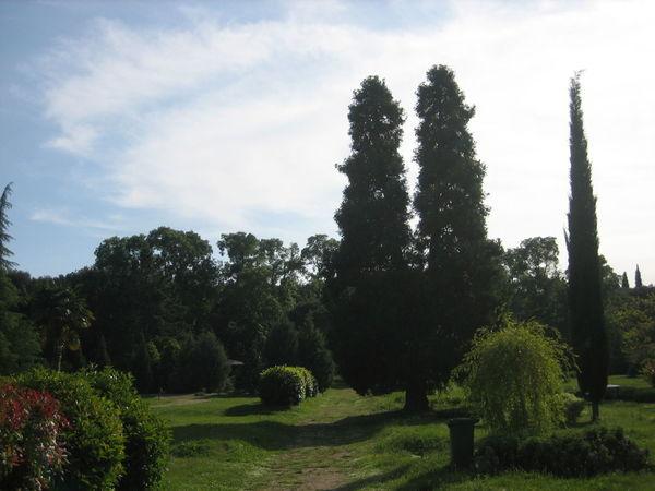Tree Sky Grass Cloud - Sky Green Color