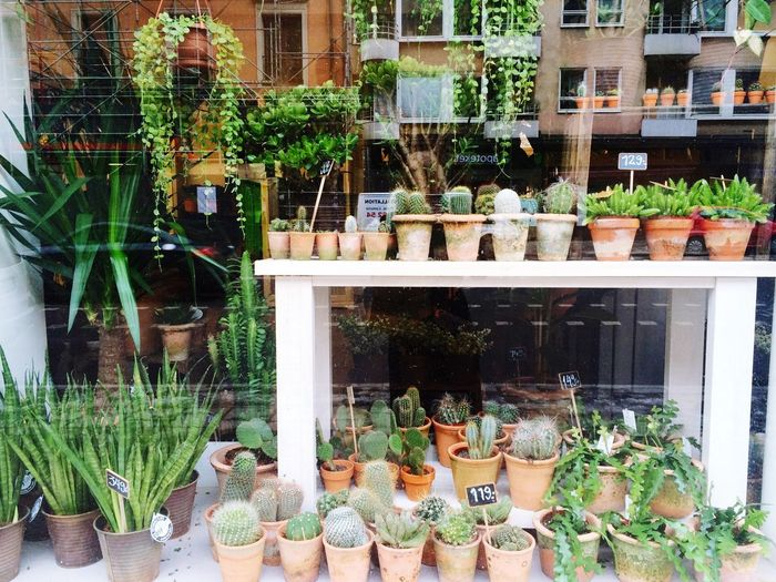 Potted plants in balcony