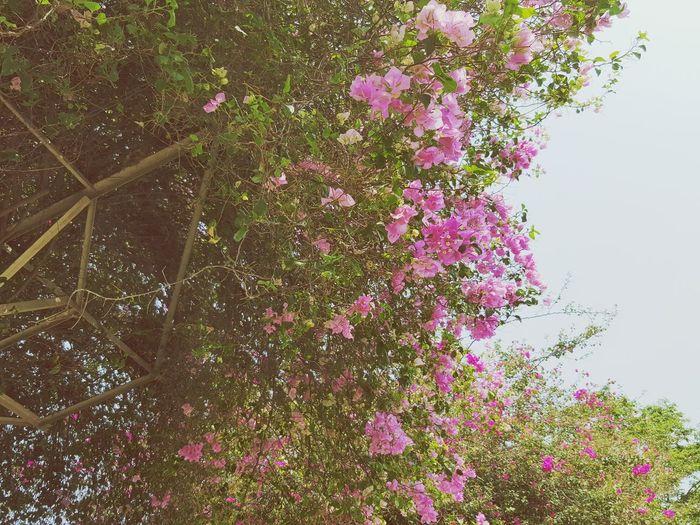 Flower to sky~