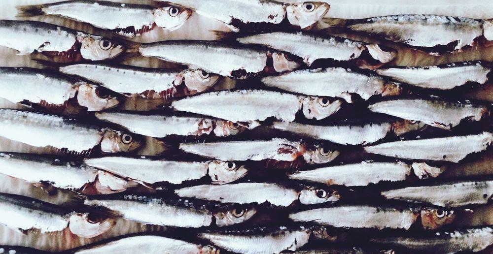 Full frame shot of small sardines