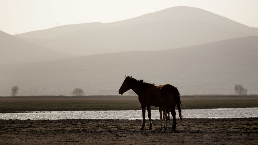 Horse and foal are standing on a land