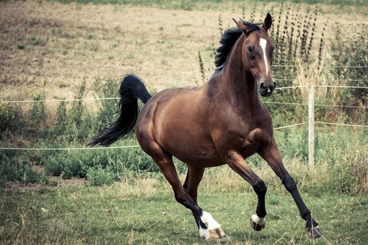 Horse running in ranch