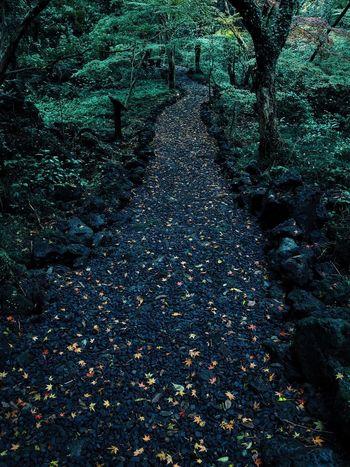 G28 JEJU ISLAND  Jeju Sonynex7 Contax VSCO Forest