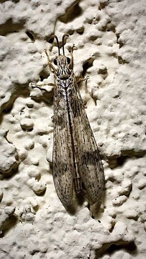 I Think This a Dameselfy but not sure, managed to survive yesterday's monsoon storm. Great survival skills. Close-up Outdoors Insect Photography Nature Beauty In Nature Insect Nightshot Building Exterior Insect Theme Damesefly