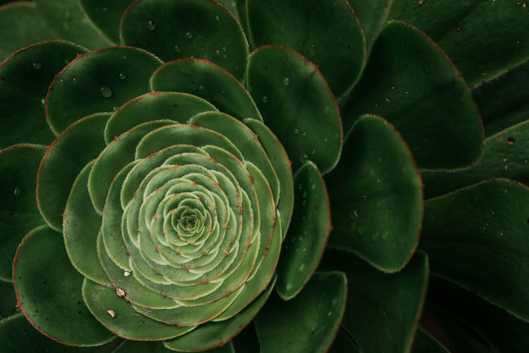 mexican garden Mexican Garden Garden Photography Plant Leaves Succulent Plant Succulents Tropical Paradise Tropical Plants Tropical Water Droplets Green Greenery Minimalist Minimalism No People Close-up Close Up Nature Beauty In Nature Natural Pattern High Angle View Outdoors Spiral