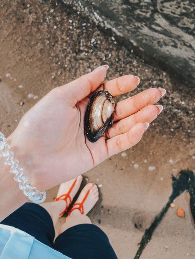 High angle view of hand holding clam at beach