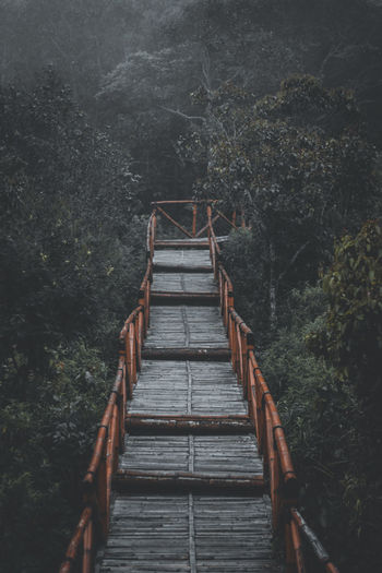 Wooden footbridge in forest
