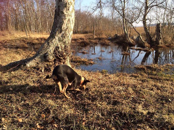 I Love My Dog Sosanimals Animal Rescue Spring