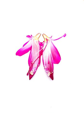 cut in half flower of Schlumbergera (Christmas cactus) Still Life Floral Cut Schlumbergera Christmas Cactus Nature EyeEmNewHere White Background Studio Shot Pink Color Flower Red Close-up No People