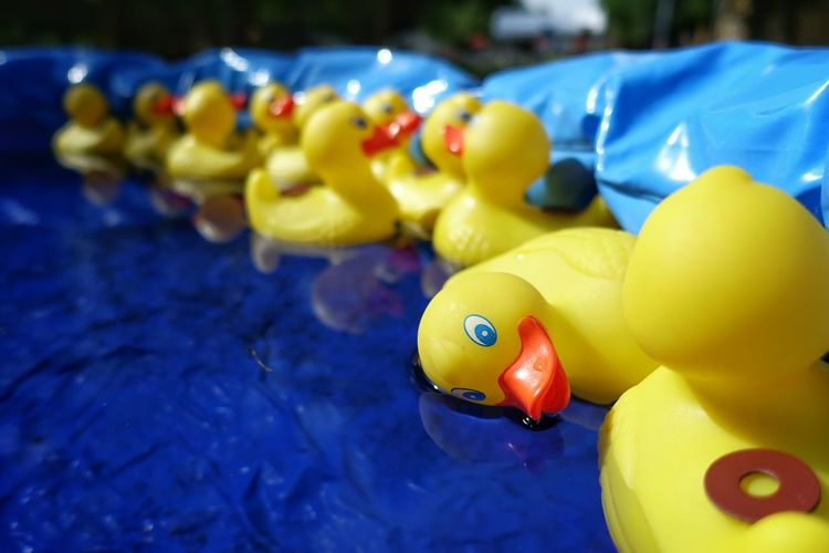 Yellow Rubber Ducks In Wading Pool At Back Yard
