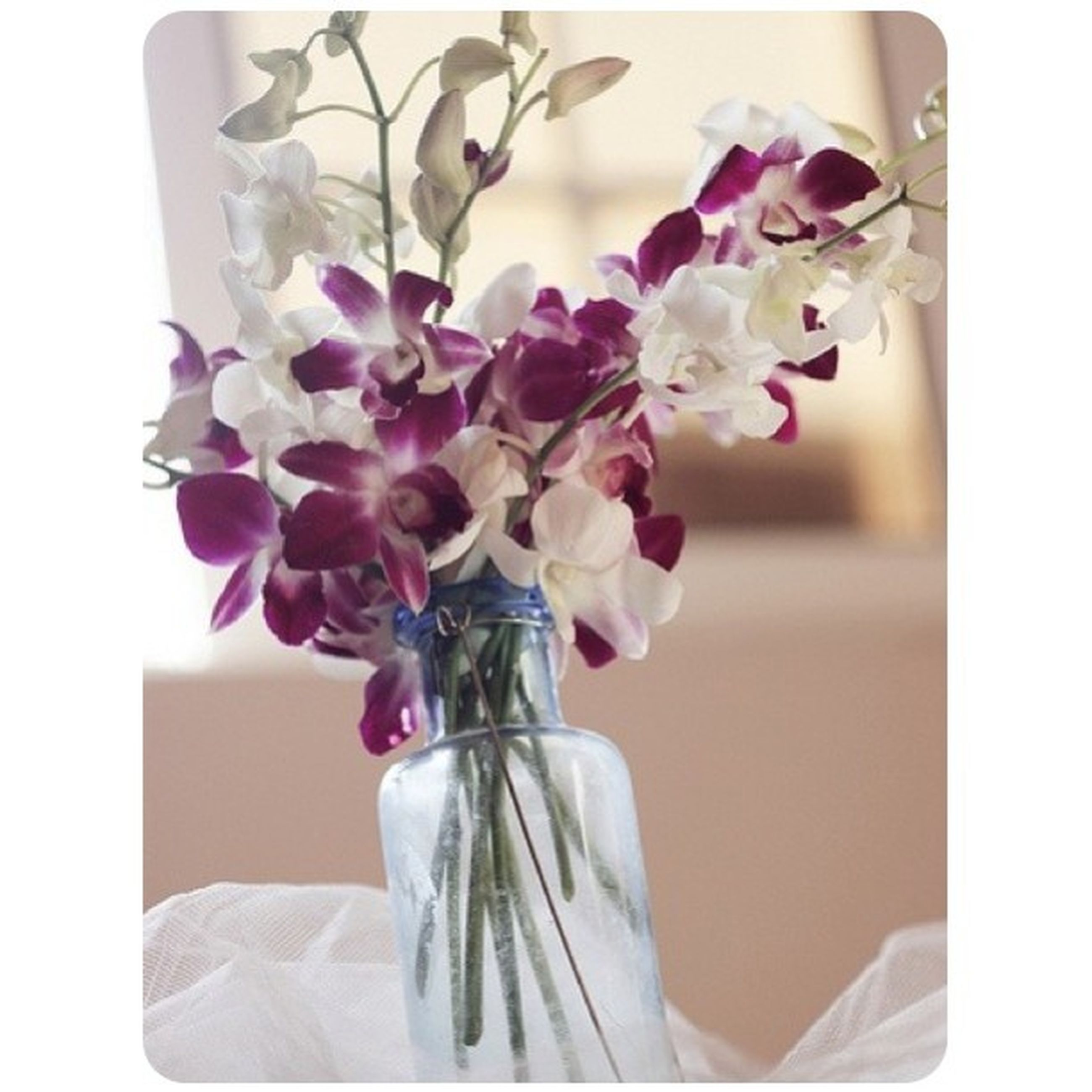 flower, indoors, vase, fragility, transfer print, petal, freshness, flower head, auto post production filter, bunch of flowers, close-up, home interior, flower arrangement, bouquet, decoration, white color, beauty in nature, nature, blossom, growth