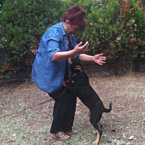 Lucky Dog Neighbor'sdog Oyuncu Yavru şanslı