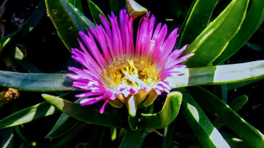 Purple Pink Animal Themes Beauty In Nature Close-up Day Flower Flower Head Fragility Freshness Growth Leaf Nature No People One Animal Outdoors Passion Flower Petal Plant