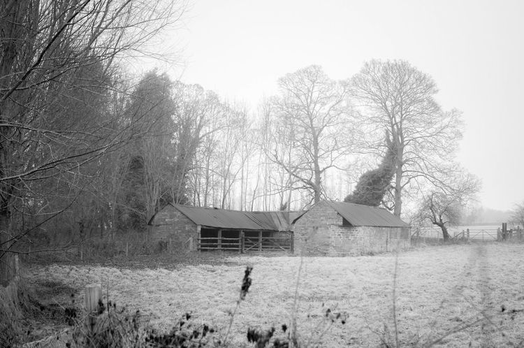 Agriculture Photography Architecture Bare Tree Britain Building Exterior Built Structure England EyeEm Nature Lover Farm Life Historical Building Mist Misty Morning Nature Northampton Northamptonshire Outdoors Rural Scene Sky Tree Winter