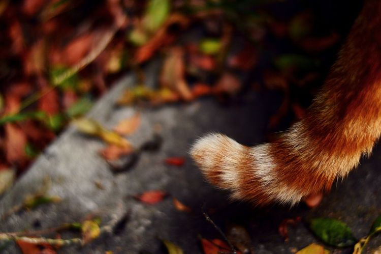 Orange Color Red Color Close-up Nature Animal Themes Day Outdoors Mammal Cat Tail No People EyeEm Best Shots