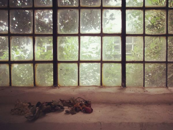 Derrière les barreaux - MAinLoveWithFlowers et Fleurs Morte Derriere Barreaux Flowers Dead Flowers Behind Bars Nature Decay Beauty In Decay Sad Sadness Depressed Depression Looking Out Of The Window How I See The World - 26.07.2015