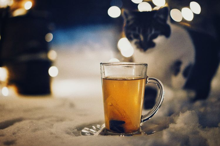 Happy Holidays, guys! Tea Snow Cat Focus On Foreground Winter Holidays Christmas Lights Drink Drinking Glass Frothy Drink Close-up Food And Drink Condensation Herbal Tea Teabag Tea Cup Tea - Hot Drink