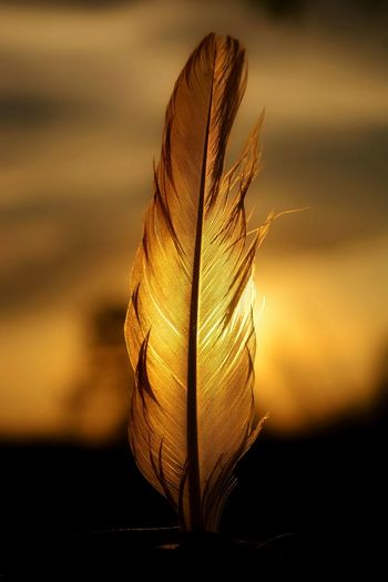 Close-up of feather against sky during sunset