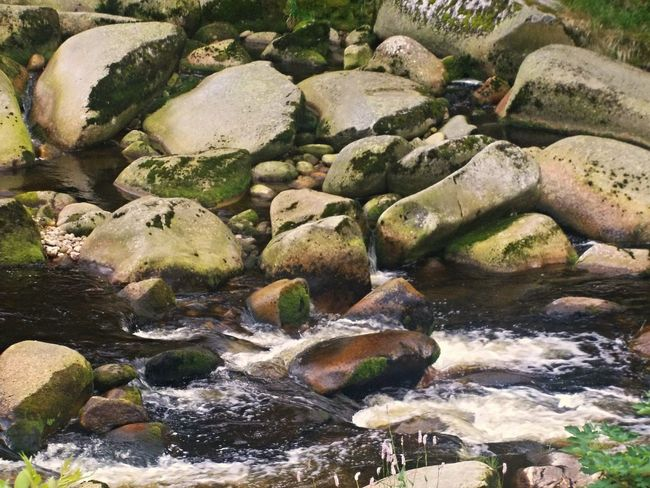 Nature Water Wood Nature_collection Forest Photography Beautiful Nature Nature Day No People Forest Stones River Riverside Beautiful Stones Stones & Water Stones And Water Stone Stone Material Stone - Object Stones N Rocks Nature Photography Naturelovers WoodLand Forestwalk Walking