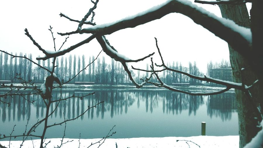 Snow Colors Light And Shadow Snow ❄ Winter Wintertime Lake View Reflection Lake Tree Nature Water Outdoors Winter Day Beauty In Nature No People Branch Cold Temperature Bare Tree Sky