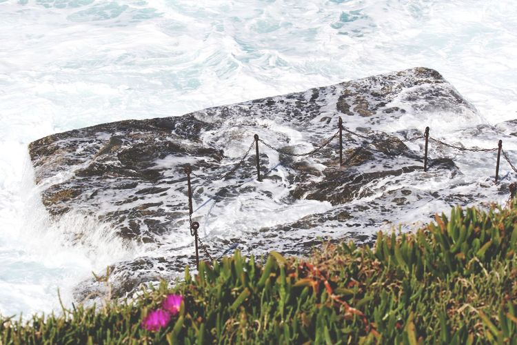 Close-up of plants growing on rocks by sea
